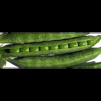 Семена гороха Олинда F1 среднеранний 1 кг, Syngenta, Голландия