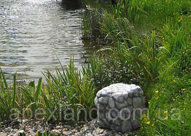 Растения для водоёмов: лучшие растения для зоны болотца.