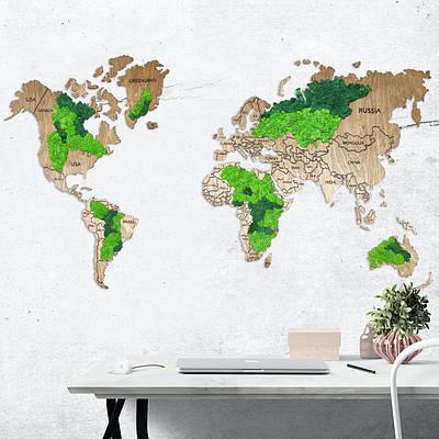 Карта мира из мхом золотой дуб