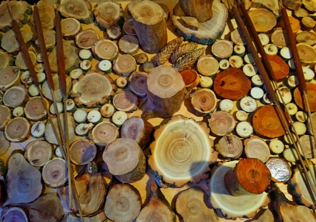 Срез дерева, спил дерева декоративный.