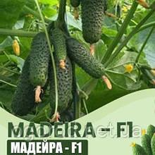 Мадейра F1 10 шт семена огурца Seminis Голландия