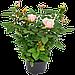 Удобрение для цветов и цветущих растений Яра Кристалон Yara KRISTALON 6-12-36 ORANGE (1,0 кг), фото 4