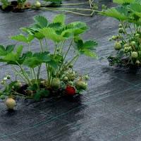 Агротканина AGROJUTEX
