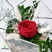 Флорариум со мхом и большой красной розой «Red rose»