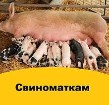 Корми для свиноматок