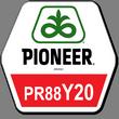 Семена сорго PR88Y20/ ПР88И20 Пионер