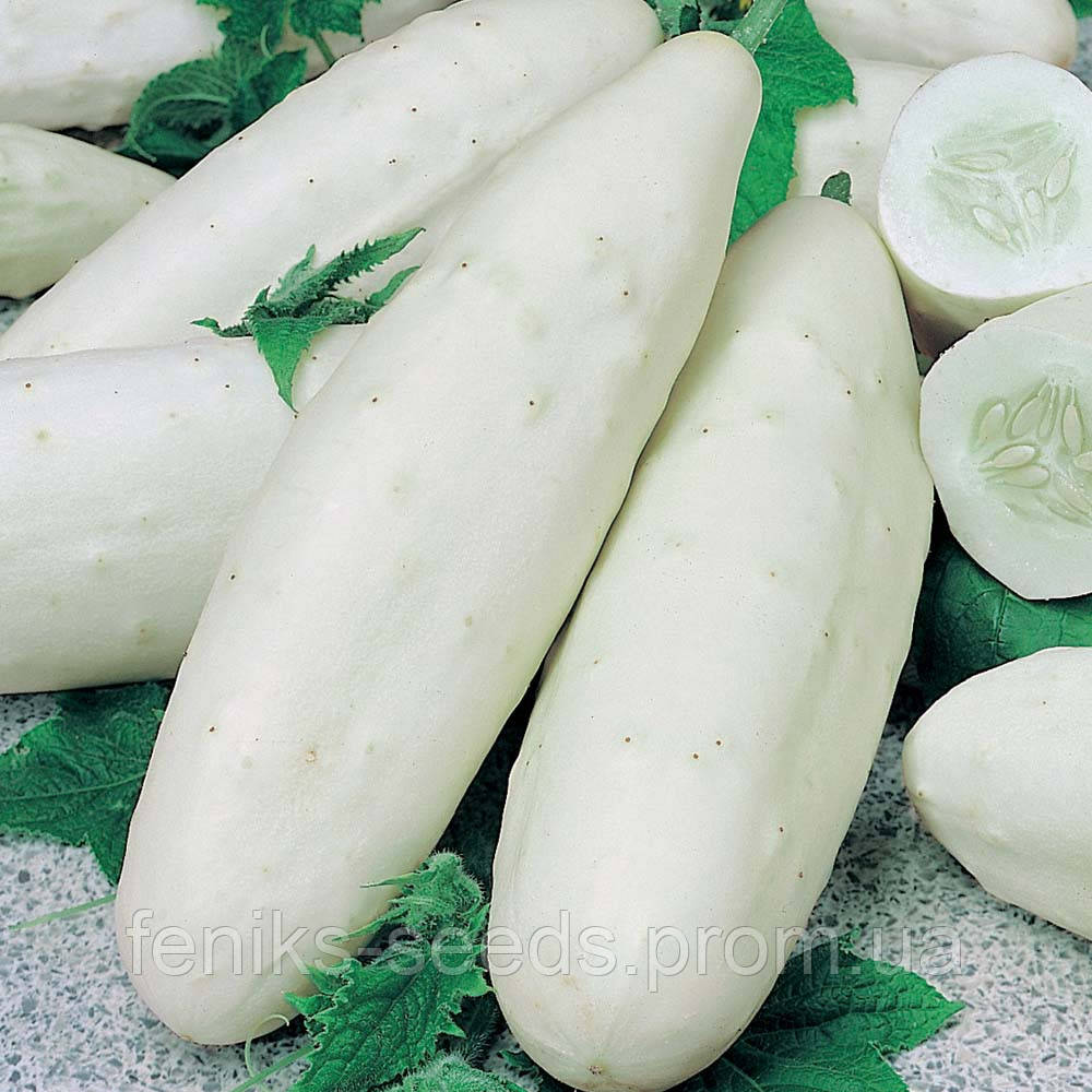Огурец белый семена