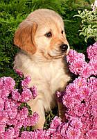 "Пазлы ""Castorland""  260шт (26906) 32*23 см (Собака в цветах)"