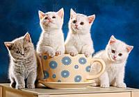 """Пазлы """"Castorland""""  500шт (52042) 47*33 см (Котята в чашке)"""
