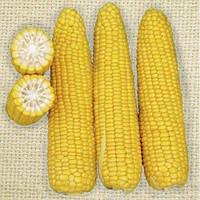 Добрыня Ф1 25 000 сем. кукуруза Ларк Сидс