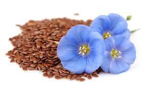 Особенности выращивания льна масличного