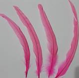 Перо петуха Натуральное Цвет Розовый 28-35см, фото 4