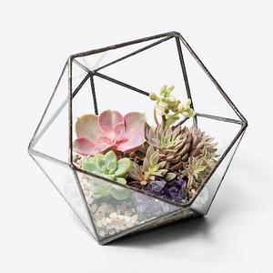 Флорариум  стабилизированные растения, композиции из мха и цветов, декор для дома и офиса