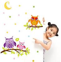 Декоративная виниловая наклейка стикер Совы на ветке (размер 63х43см)