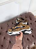 Стильные женские кроссовки ASH Leopard, фото 3