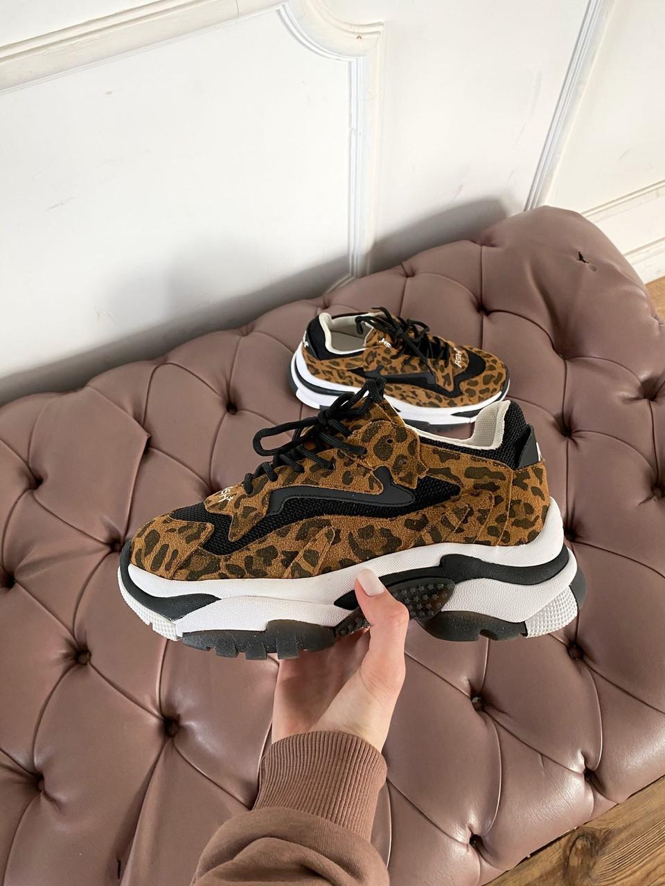 Стильные женские кроссовки ASH Leopard