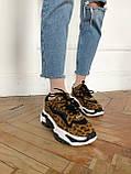 Стильные женские кроссовки ASH Leopard, фото 9