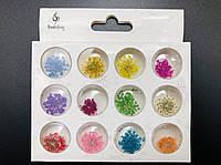 Сухоцветы для дизайна ногтей, в наборе (12 шт.)