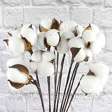 Хлопок сухоцвет (проволочная ветка с одним цветком)  (диаметр бутона 4,5-5,5 см, упаковка 12 шт)