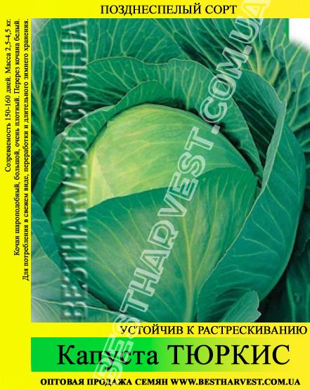 Семена капусты Тюркис 0,5кг, белокочанная