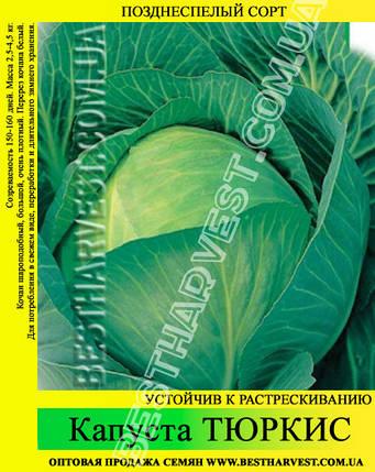 Семена капусты Тюркис 0,5кг, белокочанная, фото 2