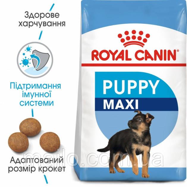 Сухий корм Royal Canin Maxi Adult для собак великих порід старше 15 місяців 15 кг 3182550702775