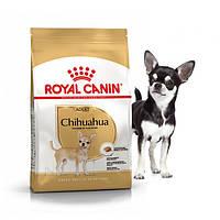 Сухий корм Royal Canin Chihuahua Adult для дорослих собак старше 8 місяців 0,5 кг