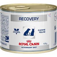 Консерви RECOVERY Royal Canin для кішок і собак в період відновлення в період хвороби 0,195 кг
