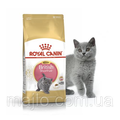 Сухий корм Royal Canin British Shorthair Kitten для кошенят породи британська короткошерста до 12 місяців 2 кг