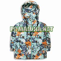 Детская ветровка куртка парка р. 98 (92) 1,5-2 года для мальчика с капюшоном хлопок тонкая 3595 Бирюзовый