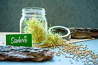 Проращиватель Микрозелени спроутер Sadove 700 мл  микроферма для проращивания семян, фото 1
