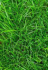 "Вафельна картинка  ""Трава"""