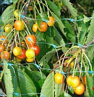 Сетка защитная на деревья, кустарники, от птиц 4м х 100м