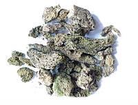 Бадяга (Ephydatia fluviatilis, Бодяга речная) 50 грамм.