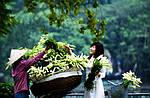 """Экскурсионный тур во Вьенам """"Незведанный Вьетнам"""" на 15 дней / 14 ночей , фото 3"""