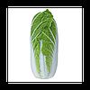 KS 374 F1 - семена капусты пекинской, Kitano Seeds