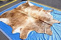 Шкура коровы тигровая бежевая, большие шкуры буйвола в Украине.