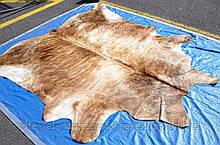 Тигрова Шкура корови бежева, великі шкіри буйвола в Україні.