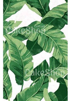 Вафельна картинка Принт листя банана в стилі D&G