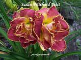 Лілейник Susan Pritchard Petit, фото 2