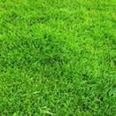 Семена газонных трав купить дешево в Украине