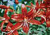 Рисунок из Китайской мозаики