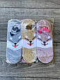 Cлідки Катонові жіночі з мордочками собачок і вушками 35-40 12 шт в уп асорті з 6 ти кольорів, фото 3