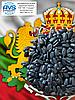 Великоплідний сорт кондитерського соняшнику ГЕРКУЛЕС. Урожайний сорт ГЕРКУЛЕС 40ц / га, вовчок A-G, 104 дні.