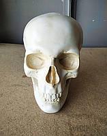 Копилка - череп, цвет слоновая кость