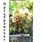 Саженцы винограда: столовые сорта, технические и кишмиш (в ассортименте), фото 9