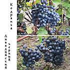 Саженцы винограда: столовые сорта, технические и кишмиш (в ассортименте), фото 8