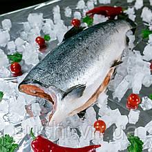 Кижуч свежемороженый тушка 2+ кг