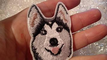 Нашивка апликация отличное качество собака белый хаски лайка термонаклейка