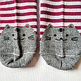 Шкарпетки жіночі в червону смужку мордочки котика на п'ятах і шкарпетках розмір 37-41, фото 3